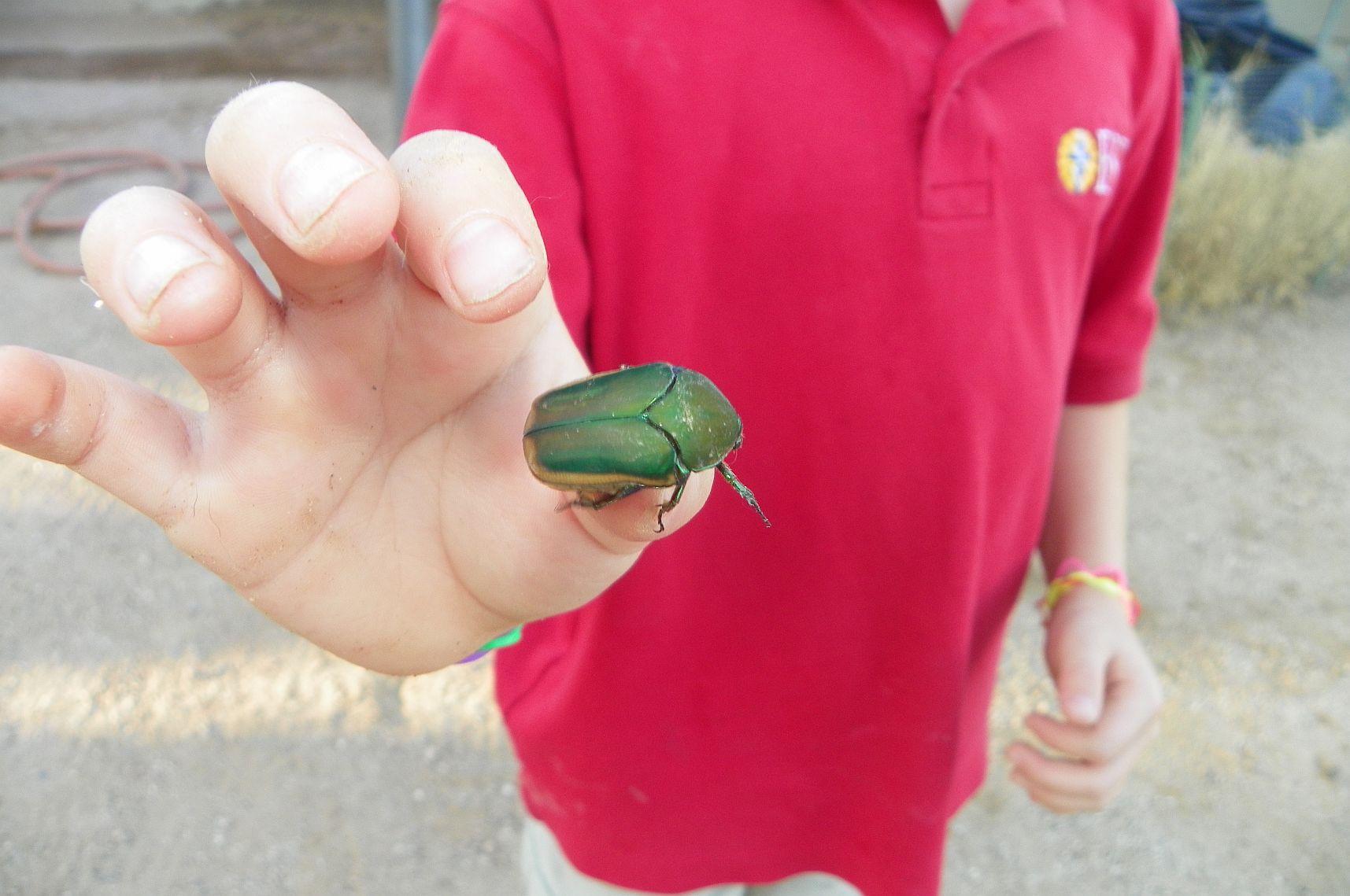 June Bug June Bug