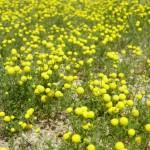 Beware of Beautiful Weeds