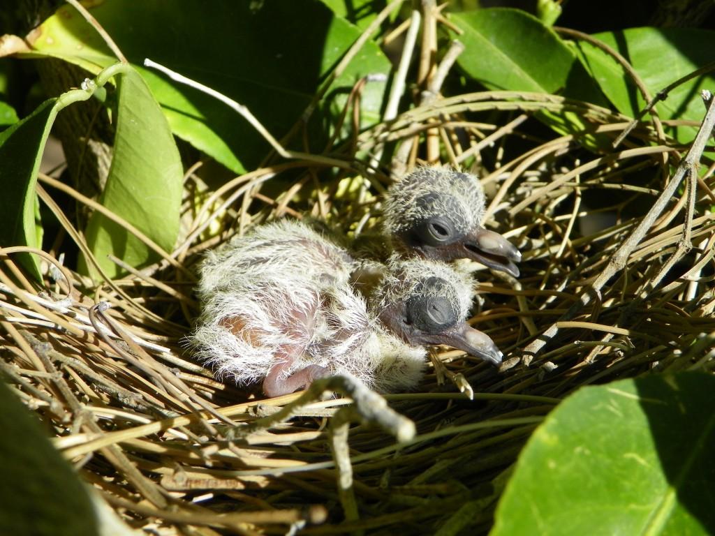 Cute spring-time animal babies.