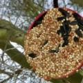 Easy DIY Bird Feeder