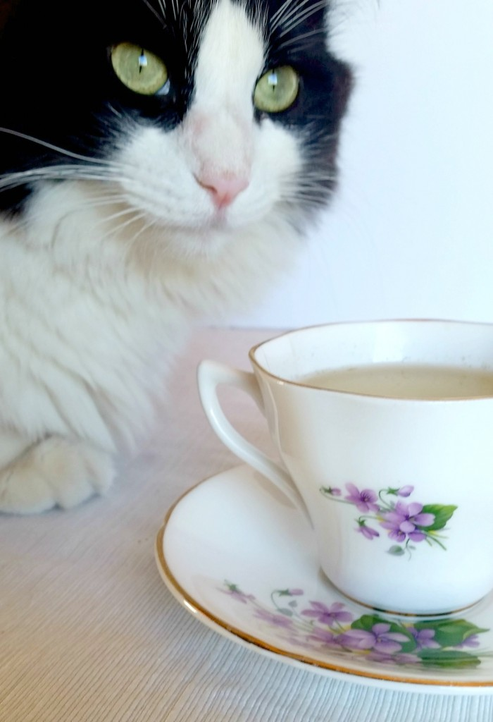 Catnip Tea (For Cats)